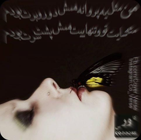 مثل پروانه همش دور برت بودم